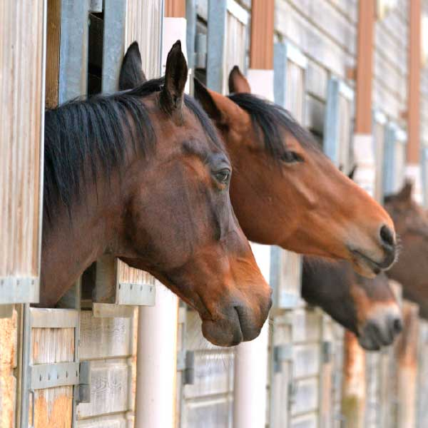 Family, Livery & Stabling