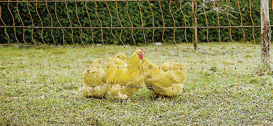 Example showing Patura netting for poultry
